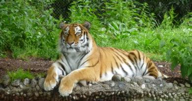 Ausflug zum Tierpark Hellabrunn in München